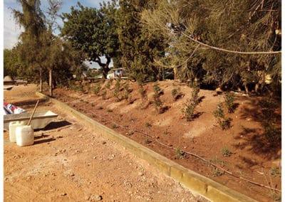 Jardín y Área recreativa la Marxadella. Detalle de diferentes plantaciones.