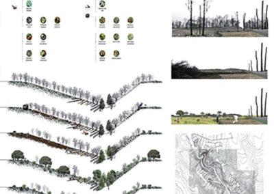 Reforestación en La Junquera. Fases.