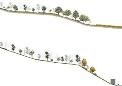 Reforestación La Junquera. Secciones